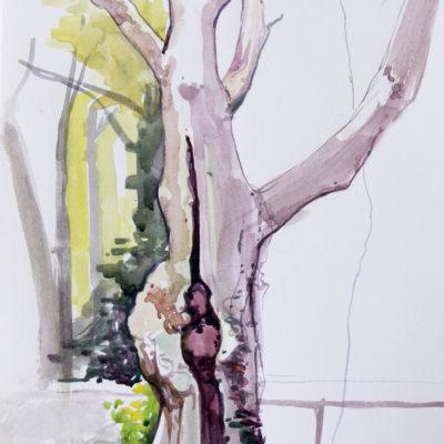Melanie Vote: Tree in McGolrick Park (2014), watercolor, 9 x12 in.
